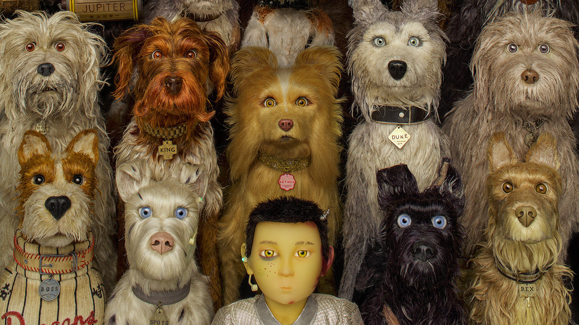 AWN Isle of Dogs Wes Anderson